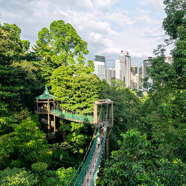 A Walk in the Park ─The KL Forest Eco Park