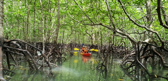 Discover Mangrove Forests In Malaysia